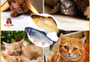 Anti obesity electric fish for your cat | Did you know that a sedentary lifestyle is bad for your cat?