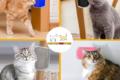 CAT MASSAGER™ | CORNER SCRATCH FOR CATS
