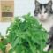 GREENCAT™ | 100% NATURAL CATNIP FOR CATS