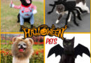 HALLOW FANTASY™ | HALLOWEEN COSTUMES FOR DOGS AND CATS